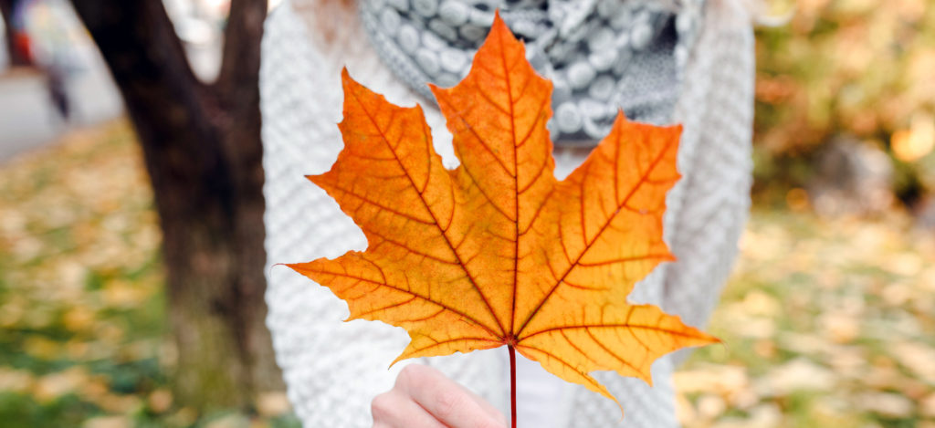 Autumn maple leaf in woman's hands